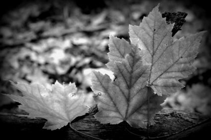hojas de otoño Optima Infinito: Tercera Temporada
