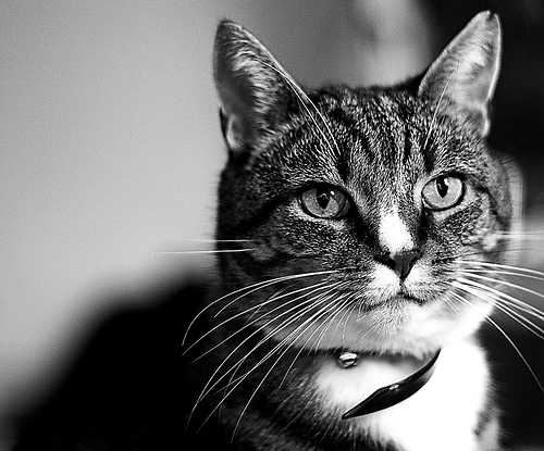 gato y cascabel ¿Quién le Pone el Cascabel al Gato 2.0?
