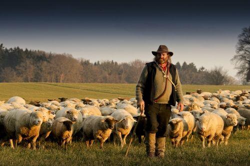 pastor y ovejas A Menos Jerarquía, Más Responsabilidad